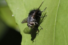 Insecten-3