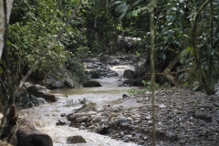Rainforest-1