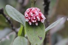 Rainforest-met-bloemen-La-Romera-Colombia.-9-12-13.-RG1