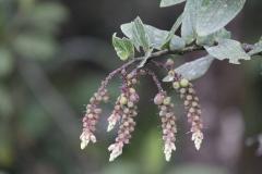 Rainforest-met-bloemen-La-Romera-Colombia.-9-12-13.-RG3