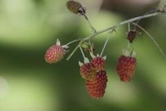 Rainforest-met-vruchten-Minca-16-12-13.-RG1