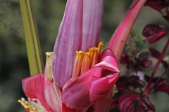 Rainforest-met-vruchten-Minca-16-12-13.-RG2