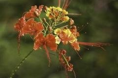 Bloemen op Curacao
