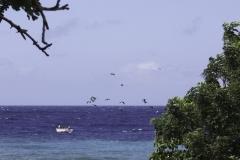 Zee bij Marie pompoen