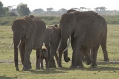 Olifant | Elephant