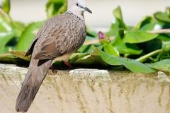 Vogels-39