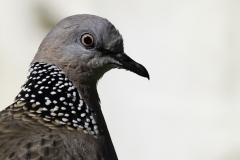 Vogels-indonesie-1