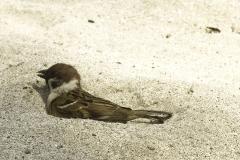 Vogels-indonesie-2